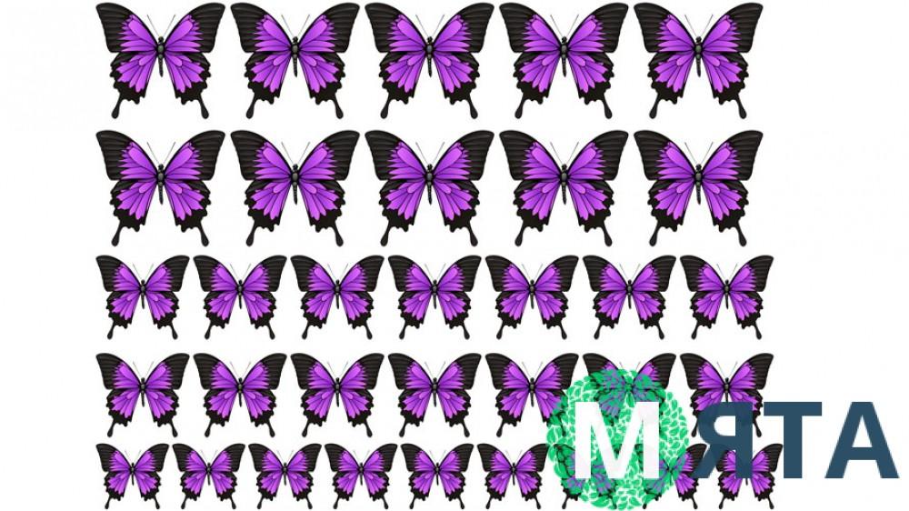 Бабочки 8