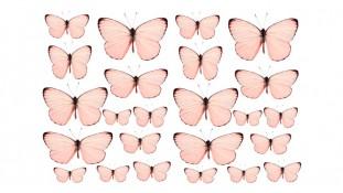 Бабочки 12