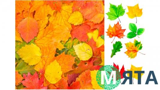 Съедобная картинка Осенний лист 1