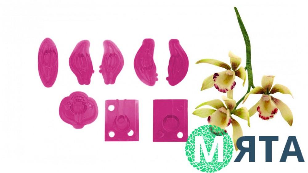 Вырубка Орхидея Цимбидиум